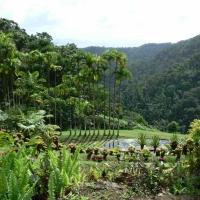 Martinique - le jardin de Balata