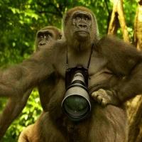 Animal Fotograf. 01
