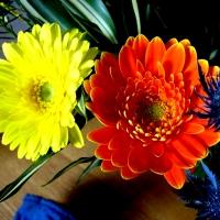 Flori, flori, flori