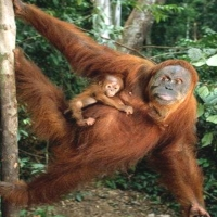 Maternitate Nu Maimuţăreală. 01