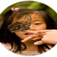 Lectia fluturelui .