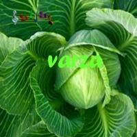 varza