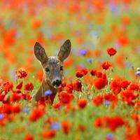 Si beau la nature