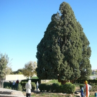 Iran Abarkuh, chiparosul lui Zoroastru