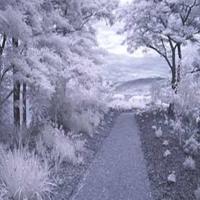 Fotografii in infrarosu 1