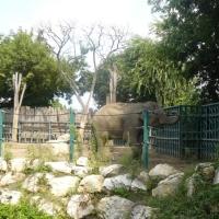 Gradina Zoologica Budapesta