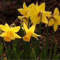 Wiosnawiosna