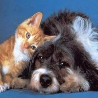 Precum Câinele Şi Pisica. 02