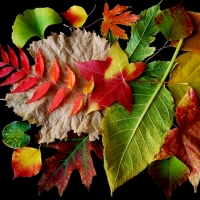 autumnsymphony-Judy