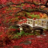 Japanese Garden...minunatele gradini japoneze