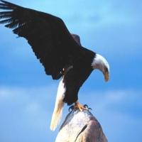 Povestea vulturului