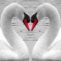 Iubire Necondiţionată. 02