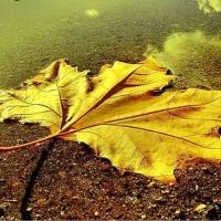 A Căzut O Frunză-n Calea Ta.