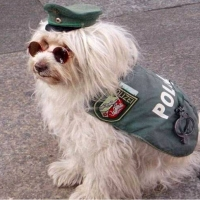 Poliţia Dotare, Antrenament, Respect. 01