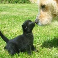 Precum Câinele Şi Pisica. 03