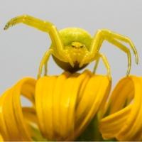 Insecte în micrografii