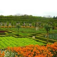 Le-jardin-du-Chateau-de-Villandry-Helen