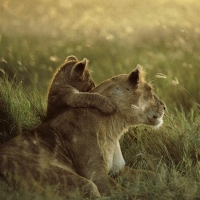 National Geographic Best of Wildlife