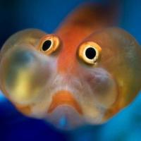 Prachtige Meerfauna