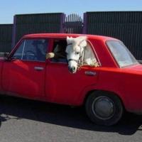 Transporturi & Autoturisme. 02