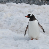 Visiting Antarctica - Noemi
