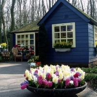 Keukenhof - The Garden onf Eden