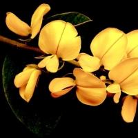 CHOPIN & FLOWERS