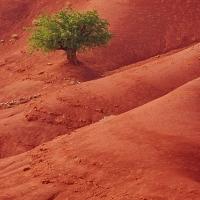 ARGAN-Copacul minune