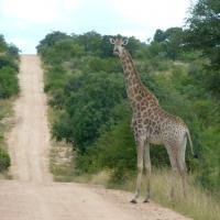 Africa de Sud, Parcul  Kruger2