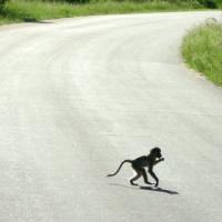 Africa de Sud, Parcul  Kruger4