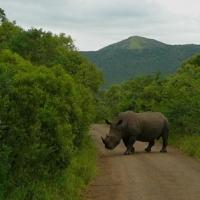 Africa de Sud, Hluhluwe Park2