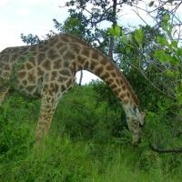 Africa de Sud, Hluhluwe Park3