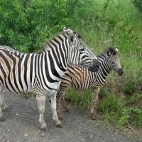Africa de Sud, Hluhluwe Park4