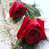 Sa iubim trandafirii