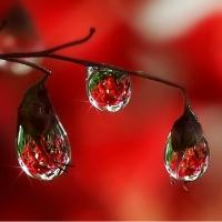 Picaturi de ploaie