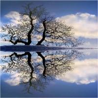 oglinzi naturale