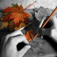 expresia culorii