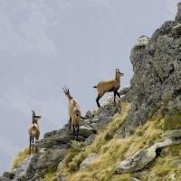 7 minuni ale naturii in Romania
