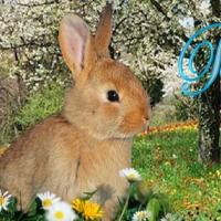Easter Bunny's Garden