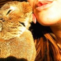Şi Animalele Sărută.
