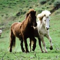 Caii liberi