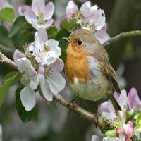 3 minute de primăvară