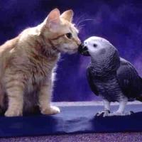 Prietenia Pisică-Pasăre. 01