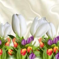 Tulips, Tulips