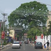 10i copaci celebri