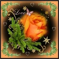 mesajele trandafirilor