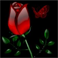 semnificatia numarului de trandafiri