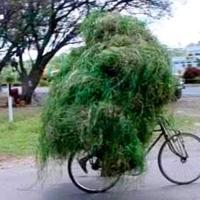 Transport & Biciclete. 02