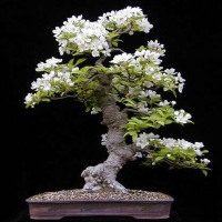 bonsai lectie despre defecte