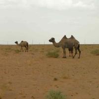 L e Desert de Gobi